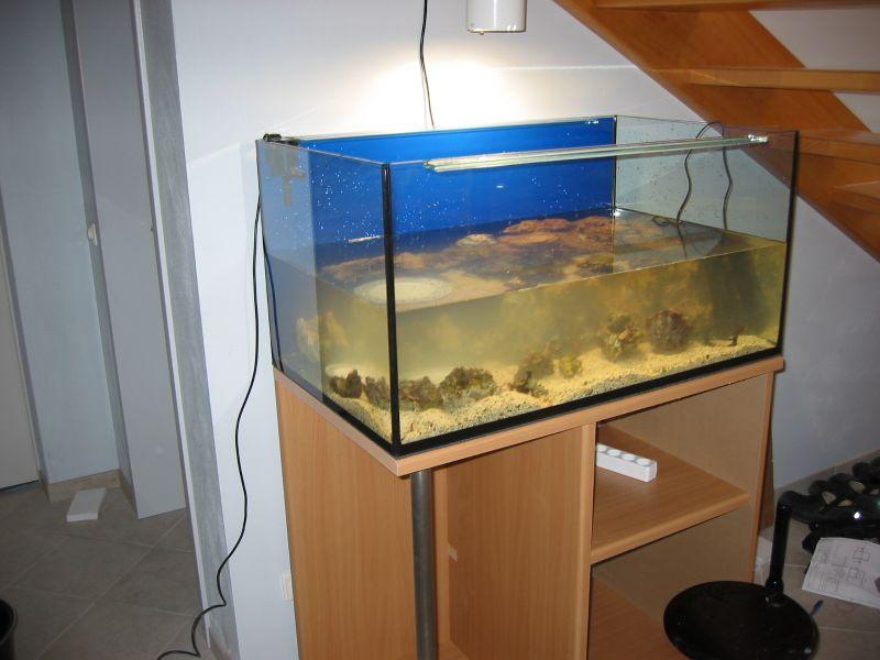 Build Kitchen Island Ikea Cabinets ~ Korallenriff und Süsswasseraquarium das schönste Hobby der Welt
